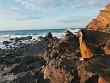 Du lịch Cô Tô: Có một quần đảo hoang sơ, bình yên như thế