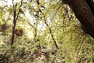 Rừng Chõi – Khu rừng nguyên sinh độc đáo ở đảo Cô Tô